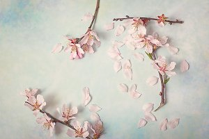 Spring flowering branch on abstract