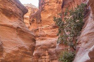 Siq Horse Petra