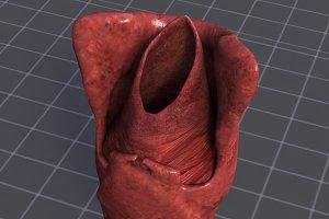 Throat Larynx