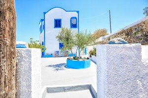 Traditional white Greek house with olive tree
