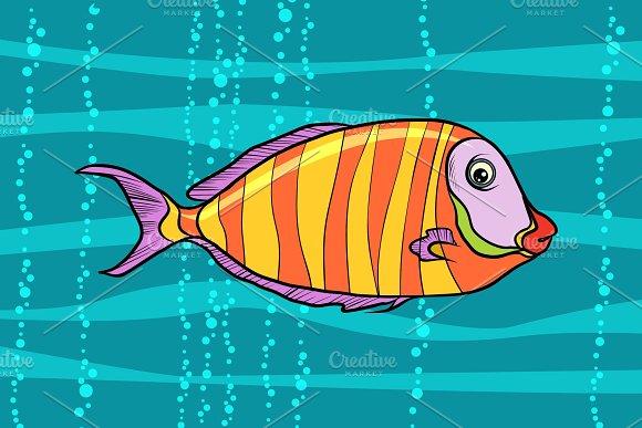 Cichlid Aquarium Fish