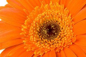 Orange Flower Vertical 2