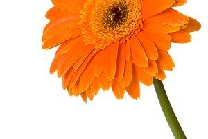 Orange Flower Vertical 3