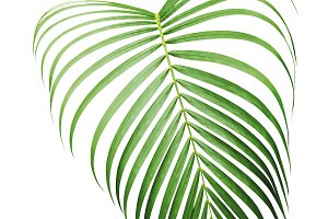 Green tropical leaf or yellow palm