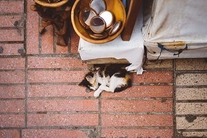 Street Cat in Marrakech