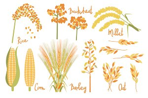 Cereals vector set