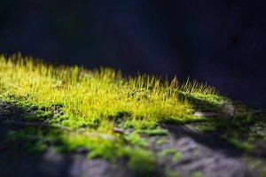 Moss in a sunlight