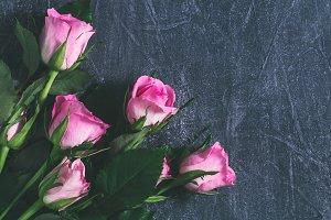 Pink roses. Flat lay.