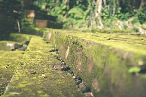 Moss Covered Stone Steps in the balinese hindu temple. Tropical island of Bali, Indonesia. Moss background.