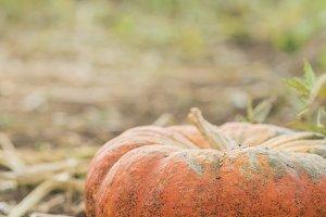 pretty pumpkin