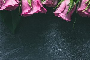 Pink roses on a dark background