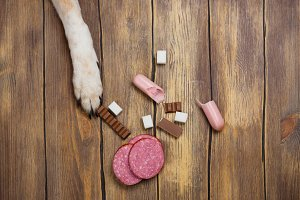 Dog eating banned food. Unhealthy meal for animals