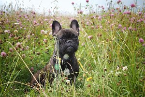 Dog portrait in the tall grass