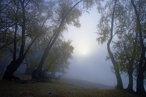 Sunrise in thick fog on an autumn river