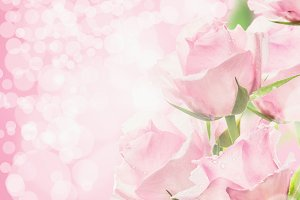 Pastel pink roses bokeh background