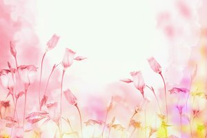 Pastel pink background with flowers