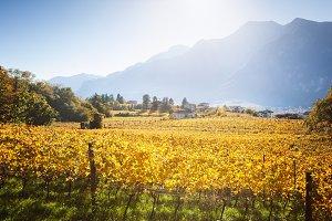 Trentino vineyards in autumn against sunset in Alps