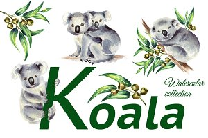 Koala. Watercolor collection
