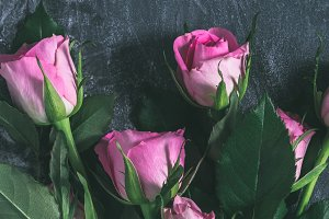 Pink roses on a dark backround