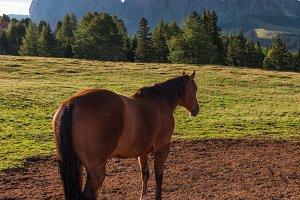 Horse at Alpe di Siusi