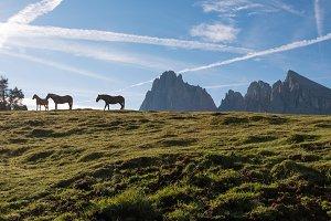 Horses at Alpe di Siusi