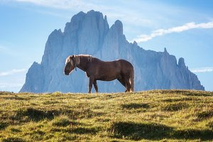 Horse in the mountains
