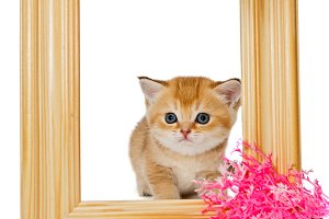 kitten in wooden photo frame