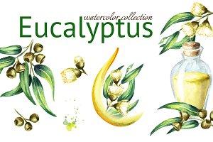 Eucalyptus. Watercolor collection