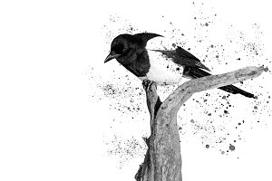 black and white beautiful bird and spray