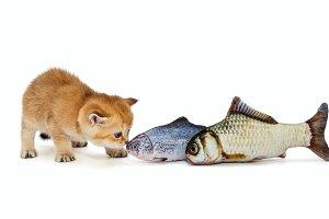 Kitty and big fish