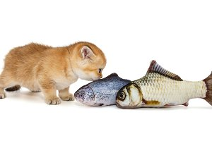 Kitty and big fish