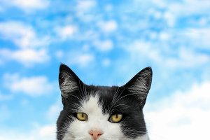 Cat and sky