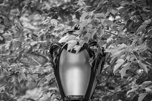 lamp in central park