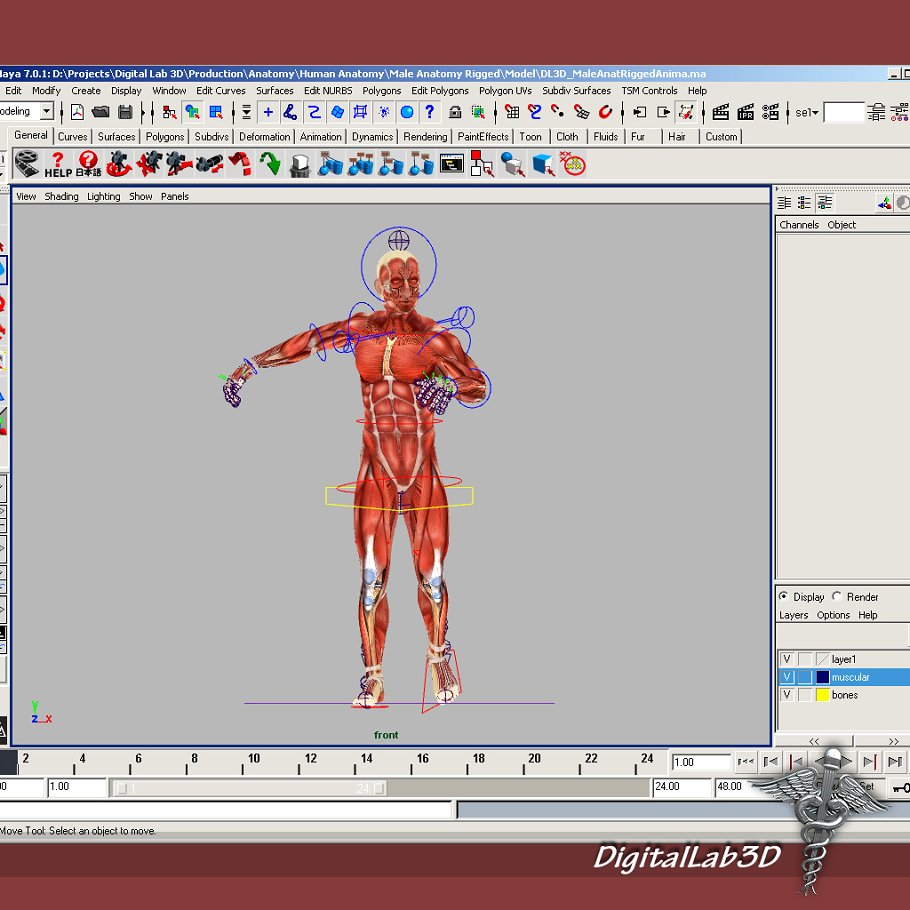 Rigged - Human Male Anatomy ~ 3D People Models ~ Creative Market