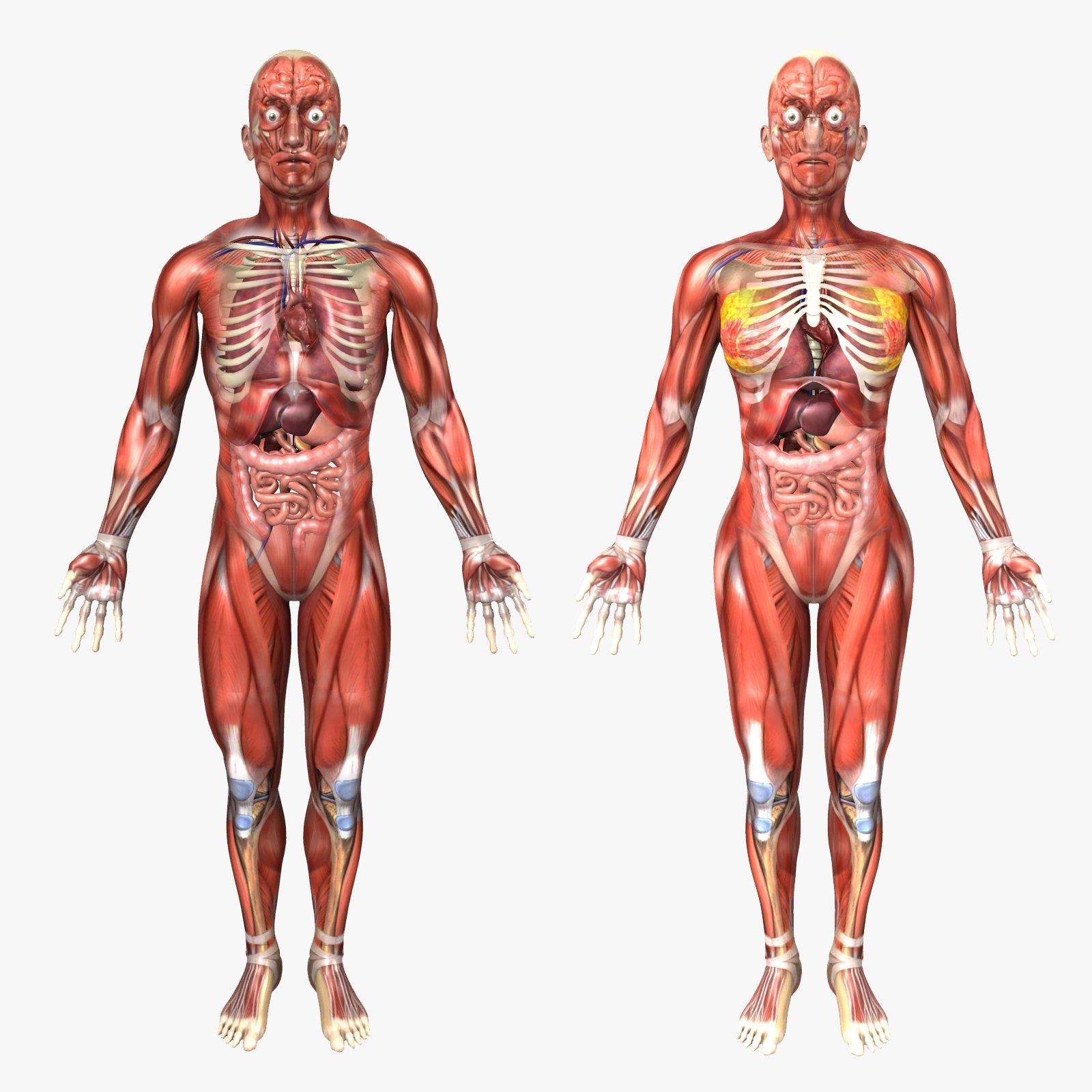 Male and Female Anatomy ~ People ~ Creative Market