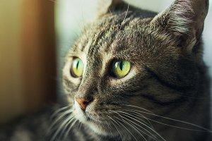 cat looking outside beautiful eyes