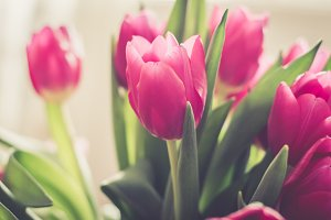 Lovely flowers pink tulips spring