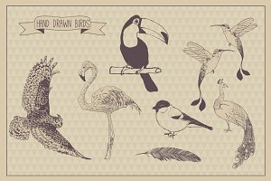 Birds collection. Hand illustrate