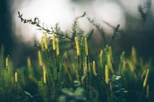 Evergreen green moss in nature