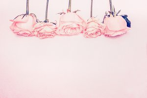 Background with pastel pink roses