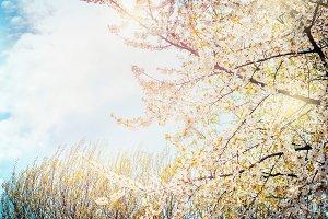 Spring white yellow blossom