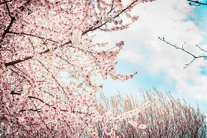Pink tree blossom at sky background