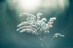 Close up of plants with frost