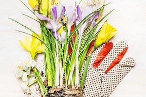 Springtime gardening