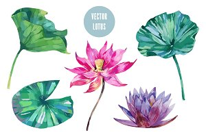 Pink lotus,leaves illustrations