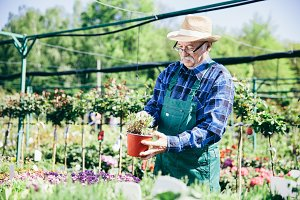 Older man working in a garden center