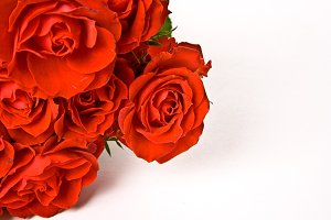 Red Roses White background photo