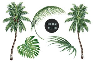 Palm trees,tropical leaves