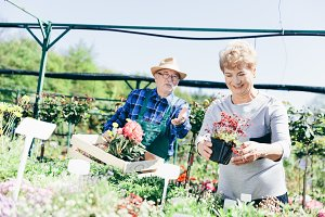 Senior couple picking plants in a ga