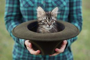 Cat inside a hat.